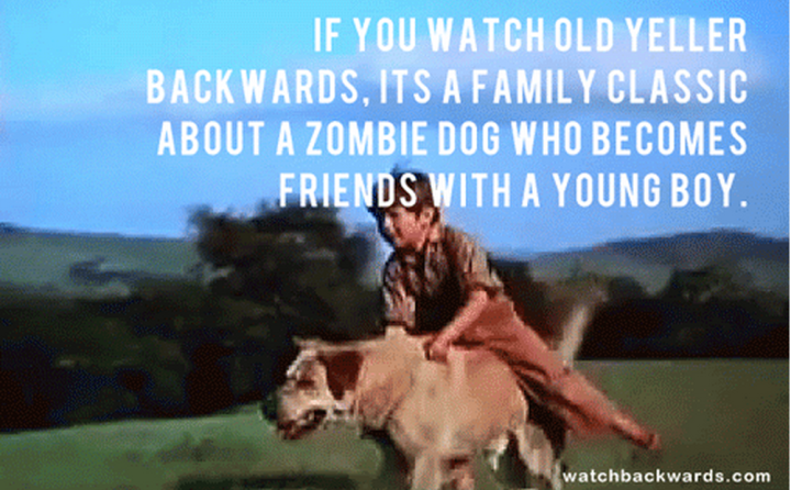 Old Yeller Meme If You Watch It Backwards Its About A Zombie